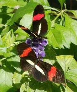 Butterfly Farm, Aruba, Jan 2013