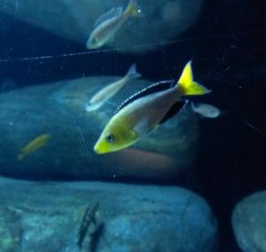 Baltimore Aquarium, May 2013