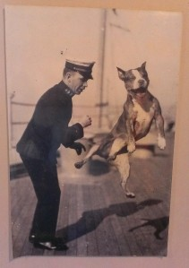 Dogs of the Navy