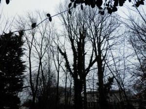 Very grey day