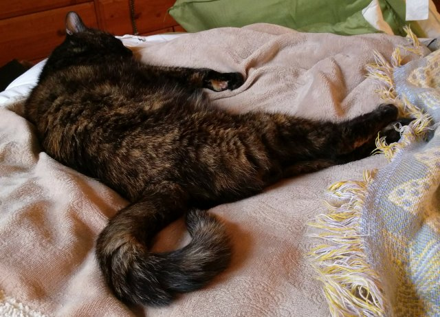Lily, a black and orange tortoiseshell cat, laying on a blanket, sound asleep