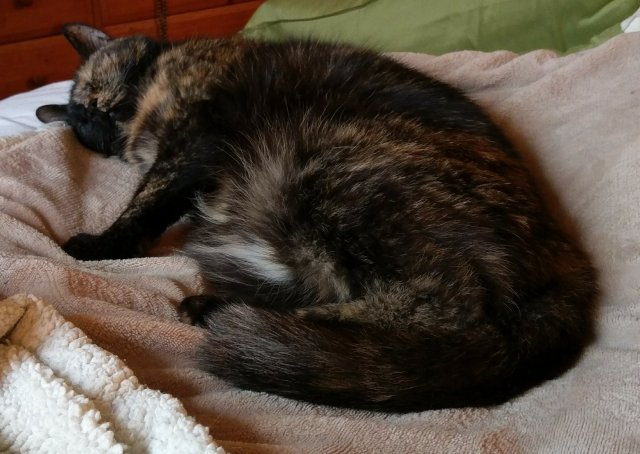 Lily, curled up on her blanket, sleeping.