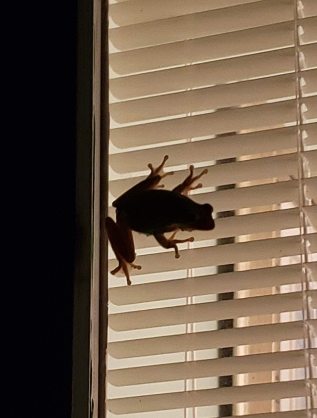 Silhouette of a frog on a door window