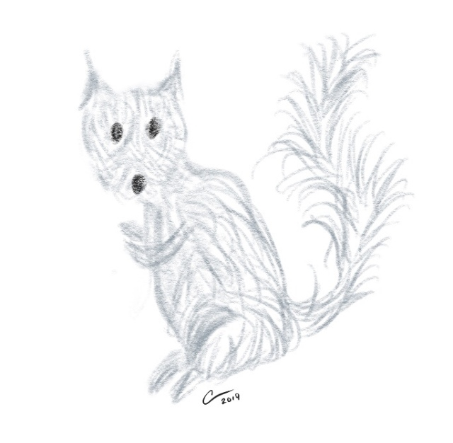Sketch of a squirrel