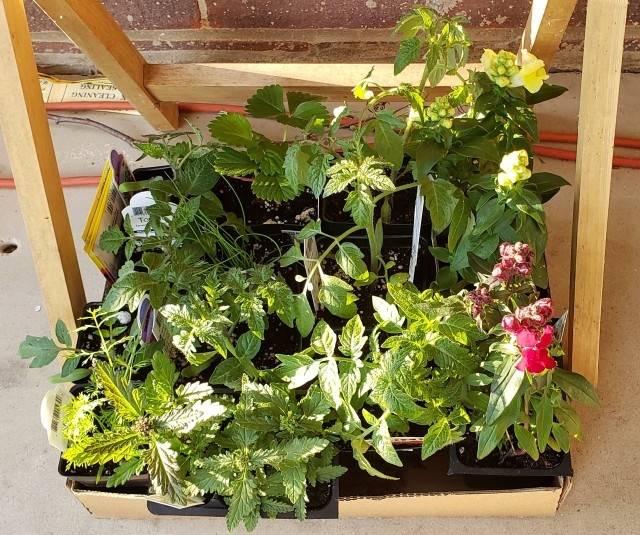 A box of assorted plants from the garden center