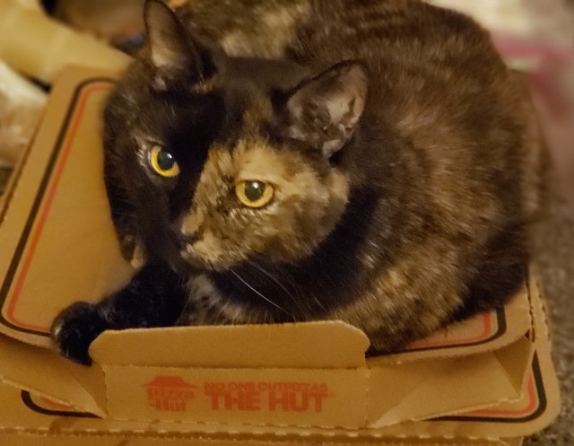 Lily, a black and orange tortoiseshell cat, happily curled up on a warm pizza box.