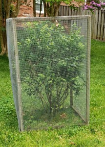 A Bush in a screened in any