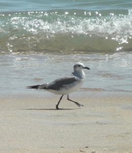 A seagull walking on the beach with waves in the background