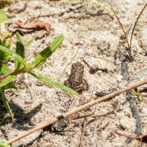 A tiny frog on sandy soil