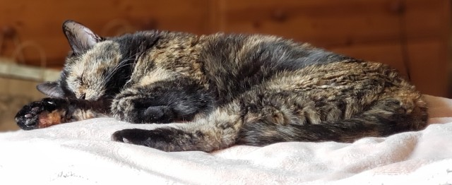 Lily, a black and orange tortoiseshell cat, snoozing on the bed