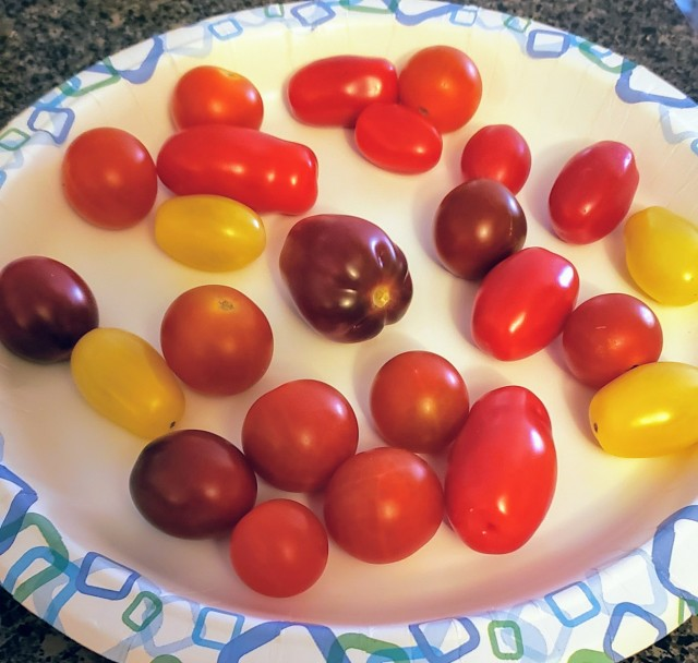 A plate of heirloom cherry tomatoes - red, orange, yellow and purple