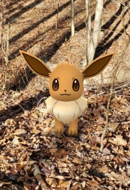 Shot of Eevee Pokemon in the woods