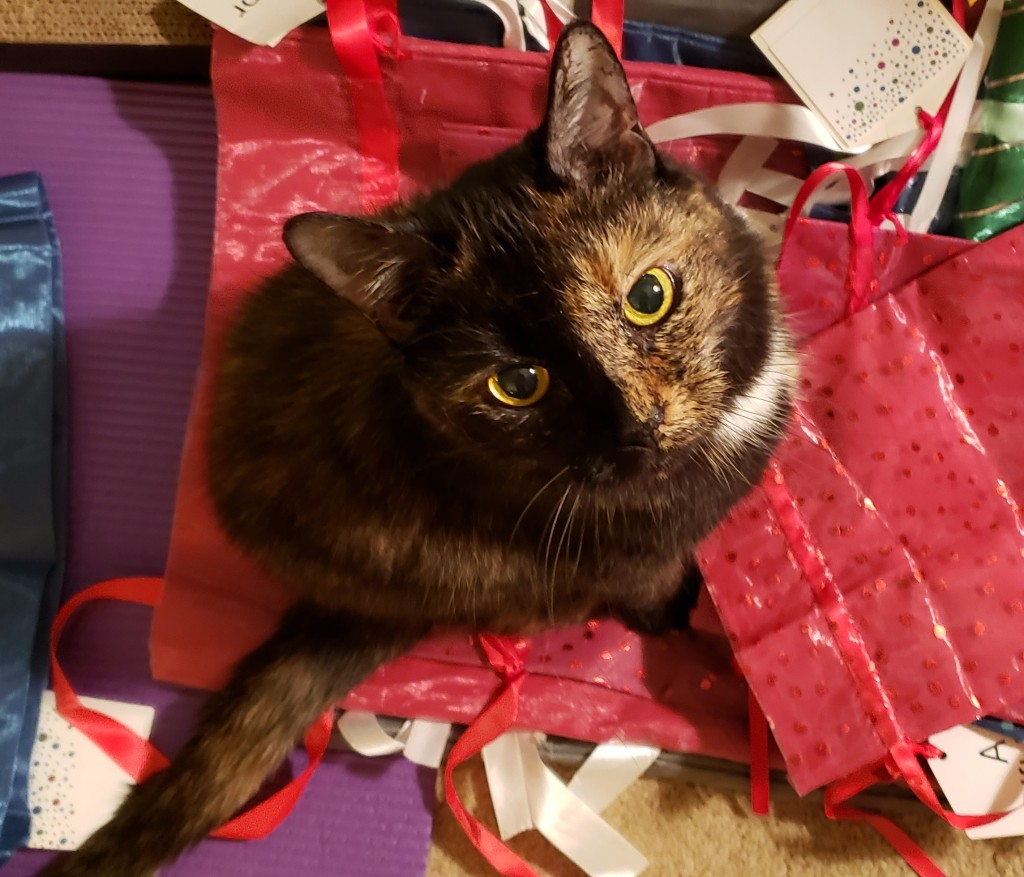 Lily, a black and orange tortoiseshell cat, sitting on a stack of gift bags