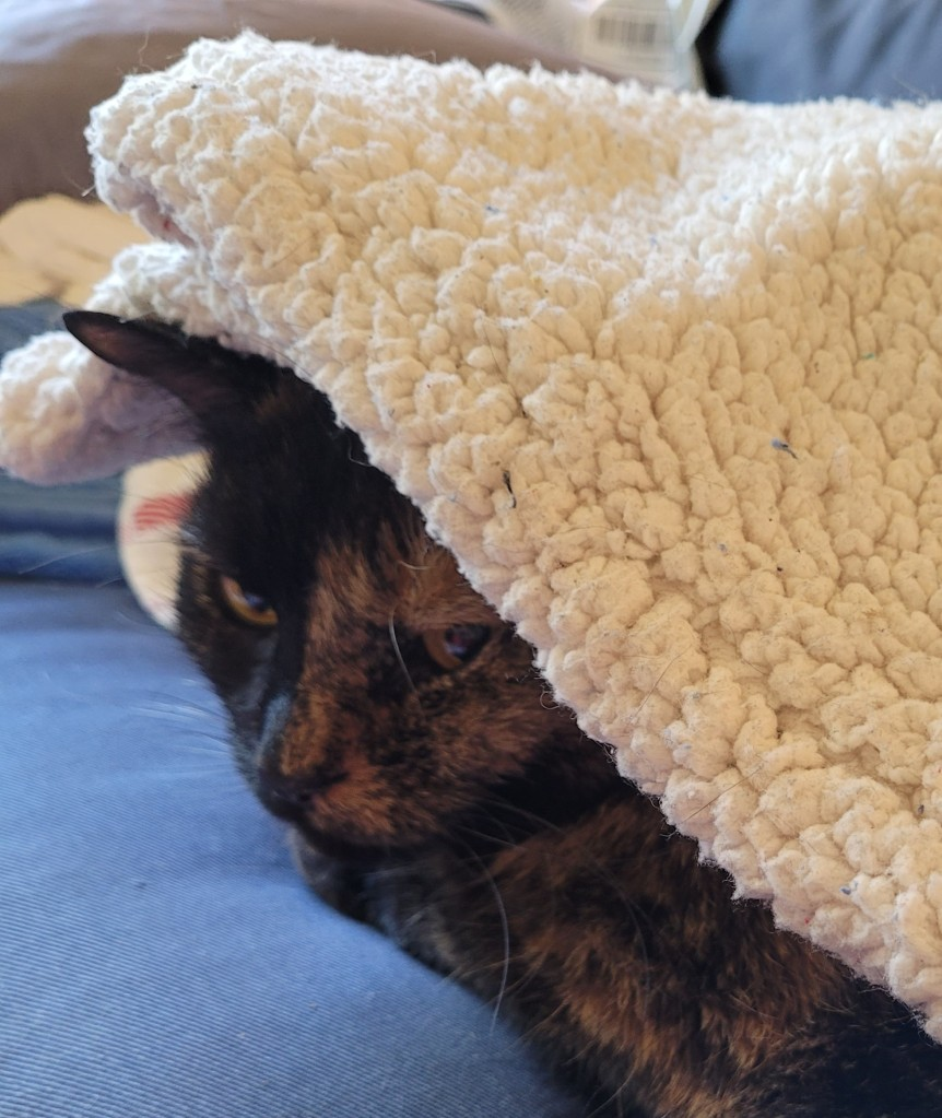 Lily, a black and orange tortoiseshell cat, under a fleece blanket with her head poking out