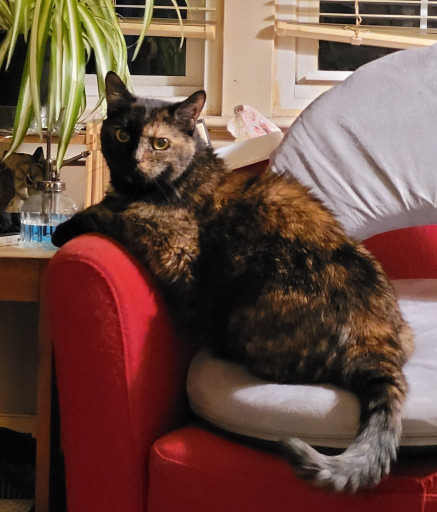 Lily, a black and orange tortoiseshell cat, sitting next to a spider plant, trying to look innocent.